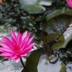 ヨガと自律訓練法の共通点は瞑想にあり
